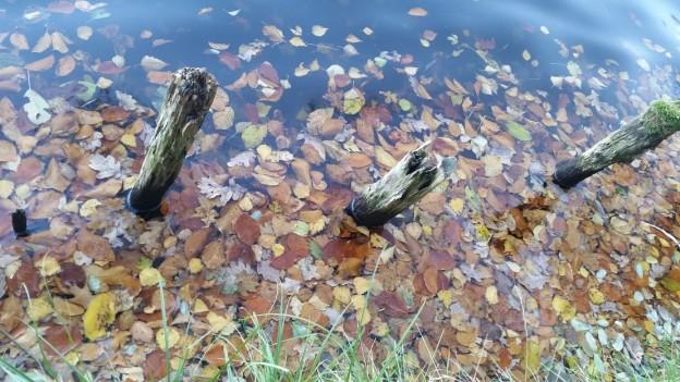 See mit Blättern