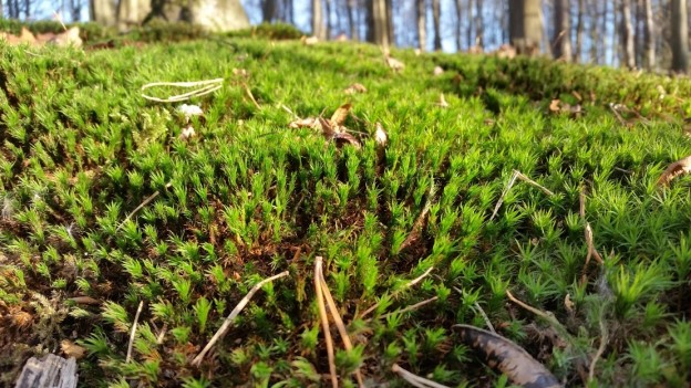 Moos im Köttinger Wald