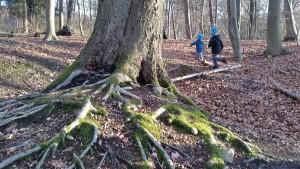 Freiheit im Wald